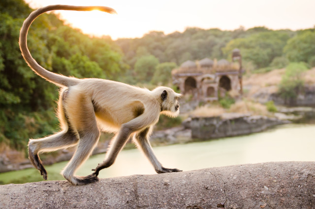 Great Escape Publishing's India Travel Writing Expedition - monkey