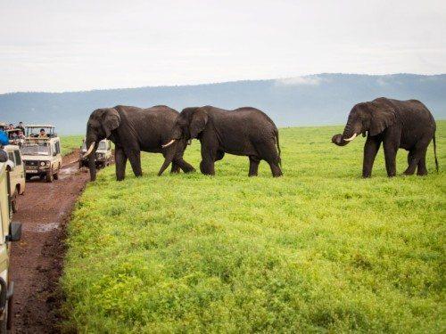 Africa - Elephants