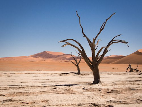 Petrified trees in Namibia