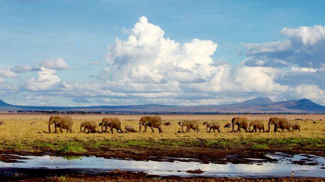 Elephants roaming Tarangire National Park