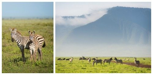 Zebra best destination for photographers