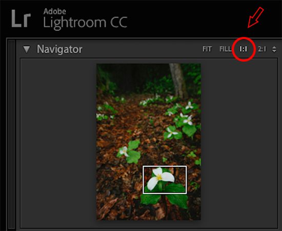 Photo focus check in Lightroom
