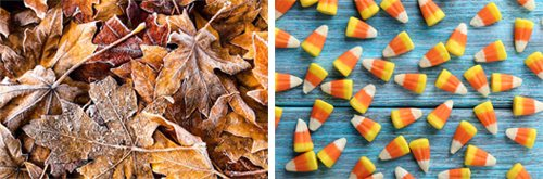 Fall themed stock photography