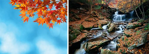 Fall foliage makes for great stock photography