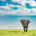 Tanzania Elephant after processing - editing photos in Lightroom