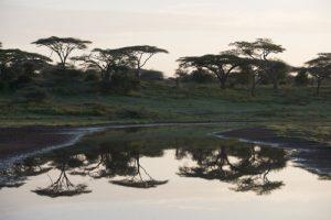 Tanzania before processing