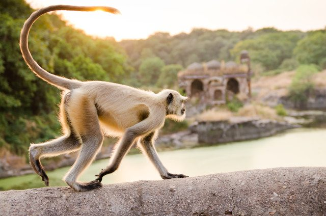 Great Escape Publishing's India Travel Writing Expedition - monkey
