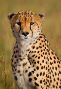Take photos of animals in the Namib Desert during our African Photo Safari Tours