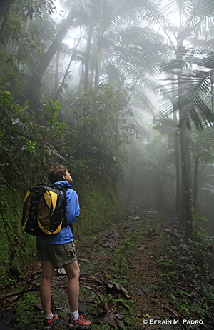Hiker in a rainforest stock photography