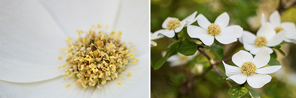 Sarah Ehlen's advice for photographing flowers