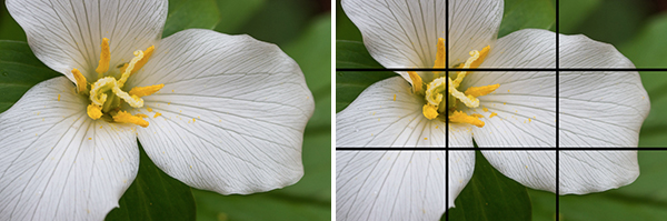 Sarah Ehlen's advice on photographing flowers