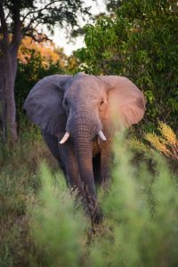 Interact with elephants in their natural environment on our African Photo Safari