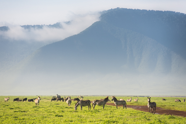 Ngorongoro Crater is one of the best spots in Tanzania